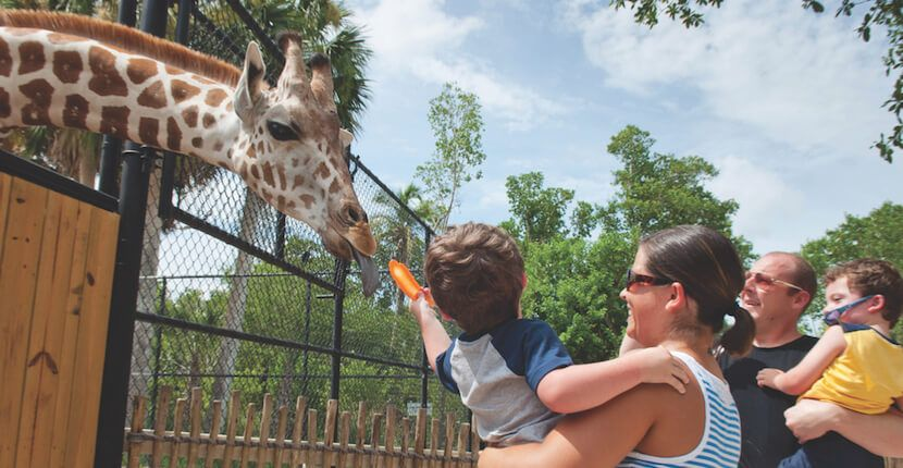 Get to know about the best things to do in Naples Florida